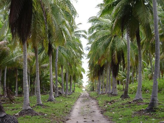 Down a shaded path