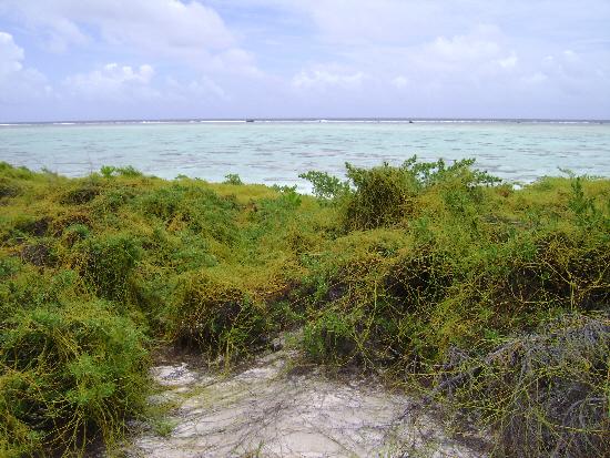 Bikini island, reef and open Pacific
